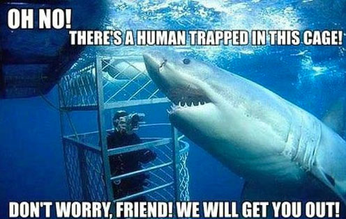 20 funny pics for Shark Week