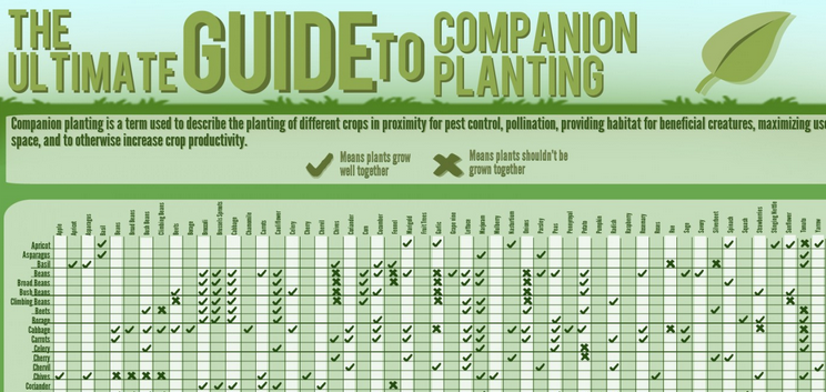 Garden plant advice and gardening tips | completegarden's weblog.