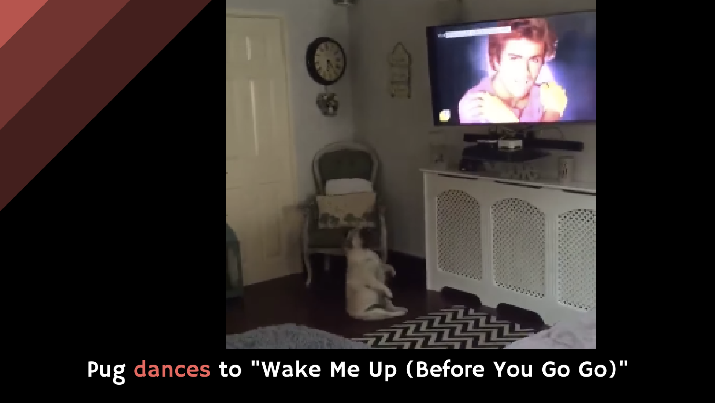 pug dancing to wham pug dances to quot wake me up before you go go quot alltop viral 7262