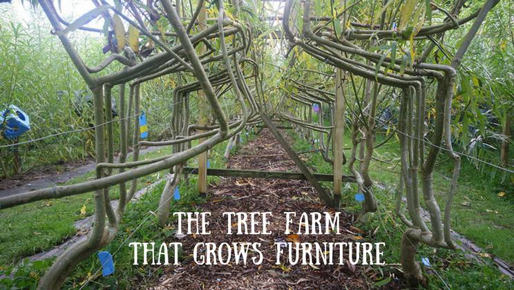 Welcome To The Tree Farm Growing Furniture Alltop Viral